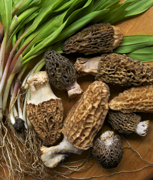 Fresh ramps and morel mushrooms. Photo by Donna Turner Ruhlman.