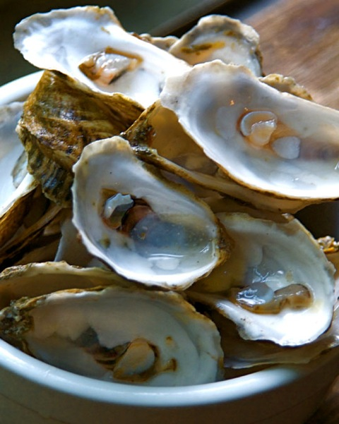 Oysters. Photo by Donna Turner Ruhlman.
