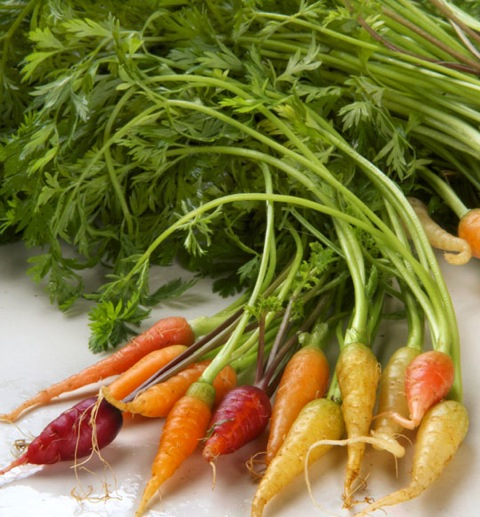 Baby carrots, from Chef's Garden,