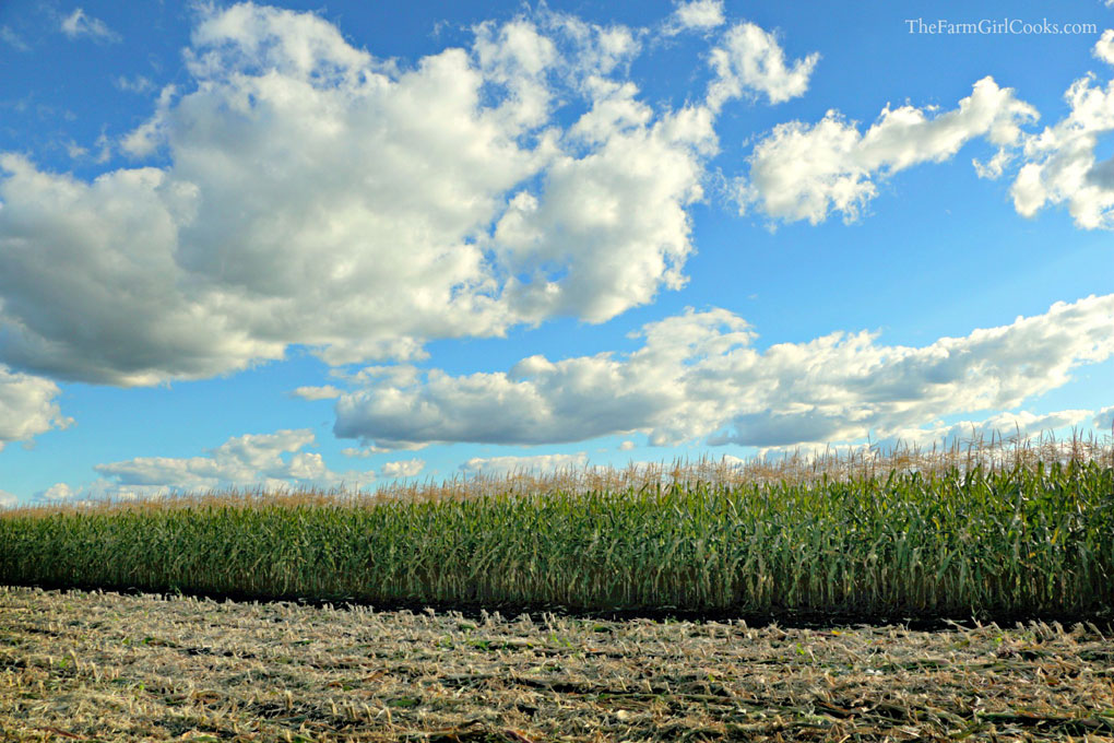 clouds-over-corn-oct@1020
