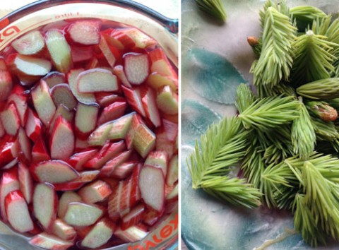 Pickled Rhubarb and spruce tips with fresh Sorrel makes a light and bright summer palate cleanser.
