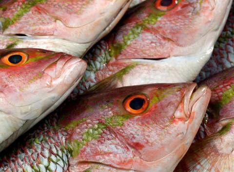 Fish-Heads@1020