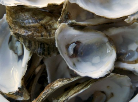 empty-oyster-shell-2